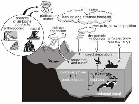 海洋食物链的各种途径